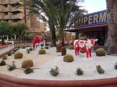 Новые коровы у отеля :)