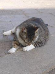 Гигантский кот у рыбного ресторана в Пуэрто де Могане)