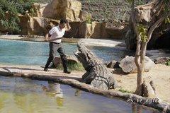 кокодрил парк