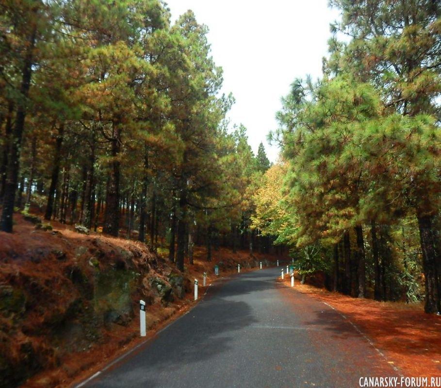Дорога вдоль сосновых перелесков…