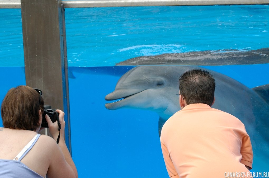 Дельфинарий. Пальмитос Парк