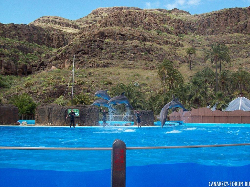Шоу дельфинов. Пальмитос Парк