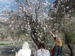 Цветение миндаля на Гран-Канария