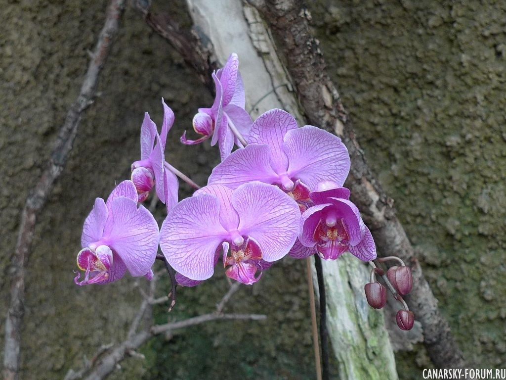Casa de Orquídeas (дом орхидей) Palmitos Park.