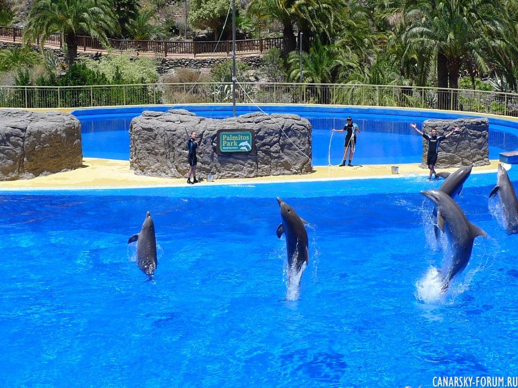 Дельфинарий. Пальмитос Парк.