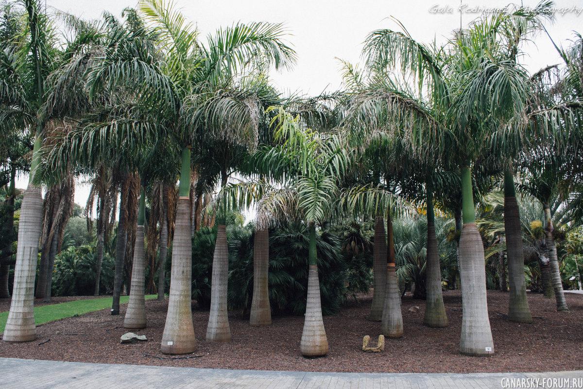 Ботанический сад Jardin Canario