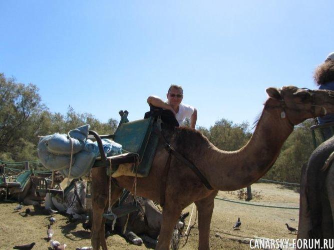 Верблюжье сафари в Маспаломас