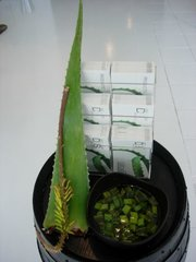 Museum Aloe vera