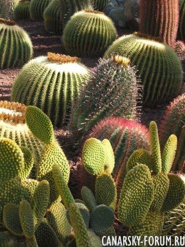 Тематический парк – мир кактусов Cactualdea (Гран Канария)2