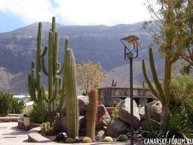 Тематический парк – мир кактусов Cactualdea (Гран Канария)12