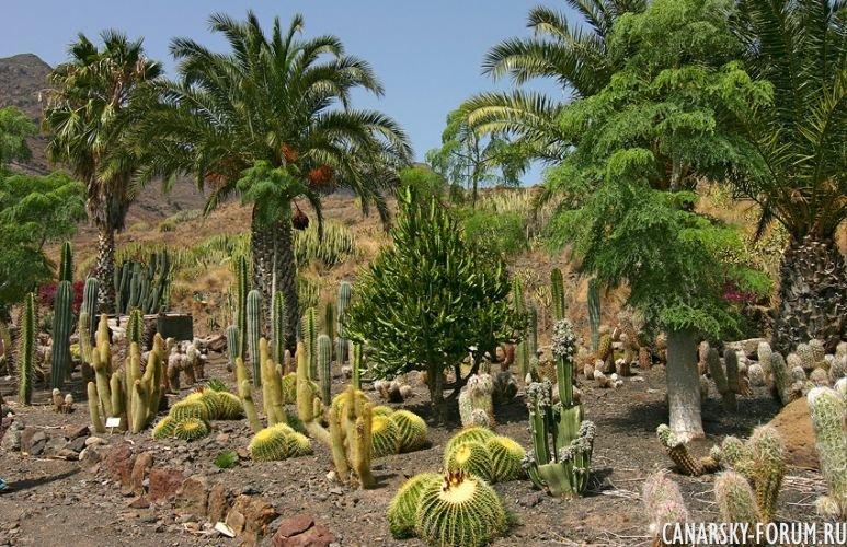 Тематический парк – мир кактусов Cactualdea (Гран Канария)4