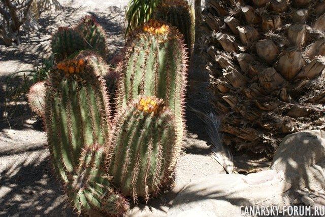 Тематический парк – мир кактусов Cactualdea (Гран Канария)28