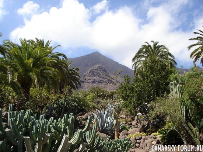 Тематический парк – мир кактусов Cactualdea (Гран Канария)14