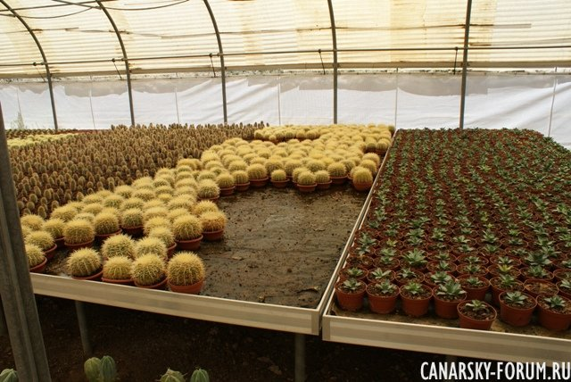 Тематический парк – мир кактусов Cactualdea (Гран Канария)26