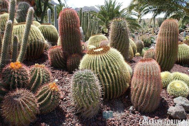 Тематический парк – мир кактусов Cactualdea (Гран Канария)29