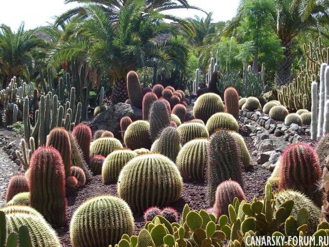 Тематический парк – мир кактусов Cactualdea (Гран Канария)13