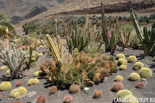 Тематический парк – мир кактусов Cactualdea (Гран Канария)20
