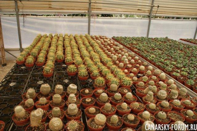 Тематический парк – мир кактусов Cactualdea (Гран Канария)30