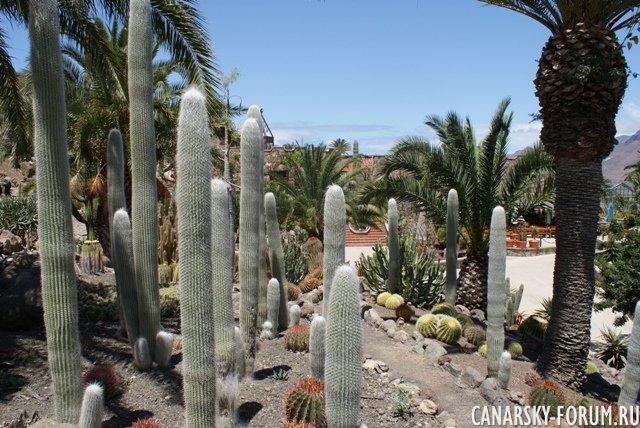 Тематический парк – мир кактусов Cactualdea (Гран Канария)17
