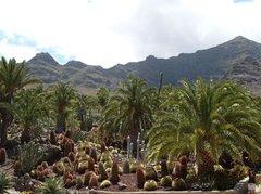 Тематический парк – мир кактусов Cactualdea (Гран Канария)8