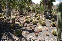 Тематический парк – мир кактусов Cactualdea (Гран Канария)18