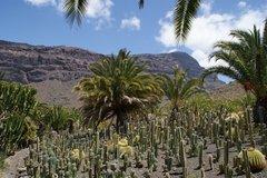 Тематический парк – мир кактусов Cactualdea (Гран Канария)21