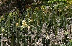 Тематический парк – мир кактусов Cactualdea (Гран Канария)7