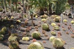 Тематический парк – мир кактусов Cactualdea (Гран Канария)27