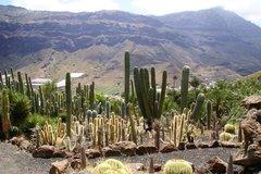 Тематический парк – мир кактусов Cactualdea (Гран Канария)33