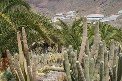 Тематический парк – мир кактусов Cactualdea (Гран Канария)16