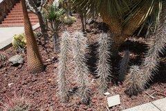 Тематический парк – мир кактусов Cactualdea (Гран Канария)31