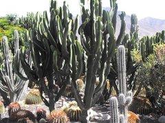 Тематический парк – мир кактусов Cactualdea (Гран Канария)10