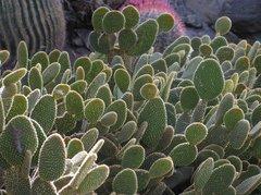 Тематический парк – мир кактусов Cactualdea (Гран Канария)
