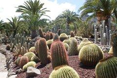 Тематический парк – мир кактусов Cactualdea (Гран Канария)32