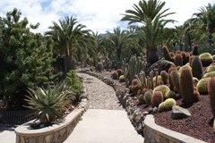 Тематический парк – мир кактусов Cactualdea (Гран Канария)22