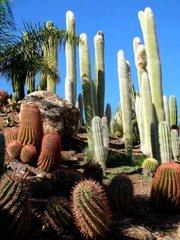 Тематический парк – мир кактусов Cactualdea (Гран Канария)3