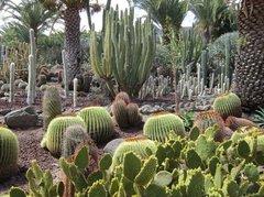 Тематический парк – мир кактусов Cactualdea (Гран Канария)37