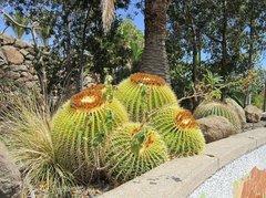 Тематический парк – мир кактусов Cactualdea (Гран Канария)34