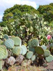 Ботанический сад Хардин Канарио 13