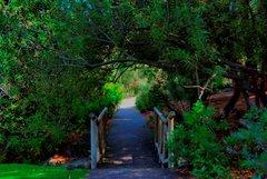 Ботанический сад Хардин Канарио 5