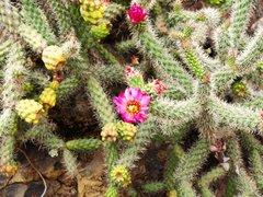 Ботанический сад Хардин Канарио 3