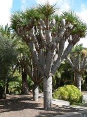 Ботанический сад Хардин Канарио 10