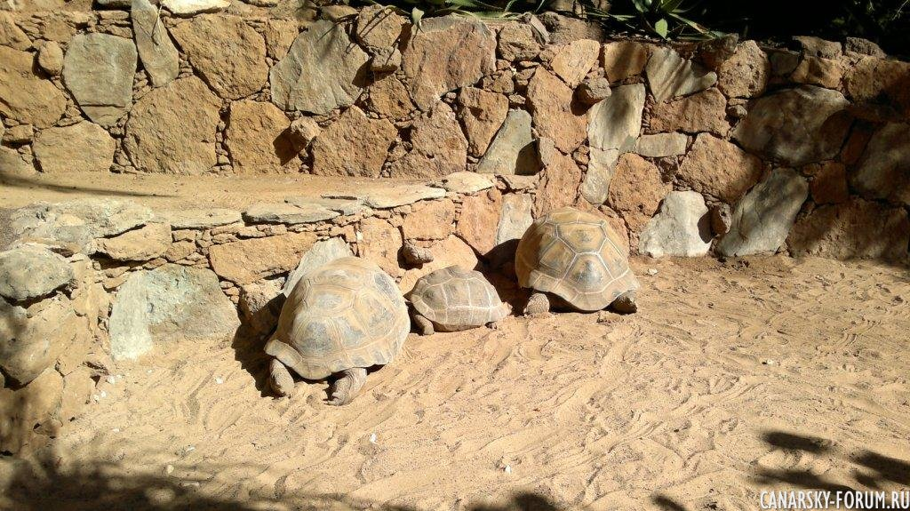 Черепахи. Были спутаны изначально с камнями :)