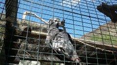Попугай, так жалостливо глядел на нас