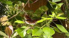 Найдите бабочку :)