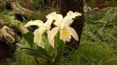 Очень красивые орхидеи
