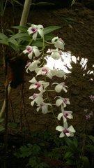 В павильоне орхидей