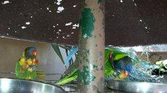 Мы пришли утром, как раз попали на завтрак к попугаям