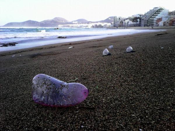 медузы на пляже Лас Кантерас.jpg