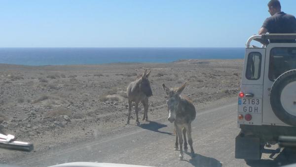 Punta de Jandía4.JPG